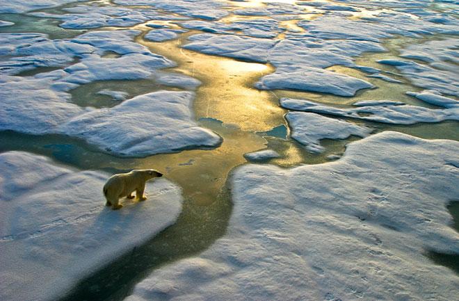 polar-bear-ice-floe